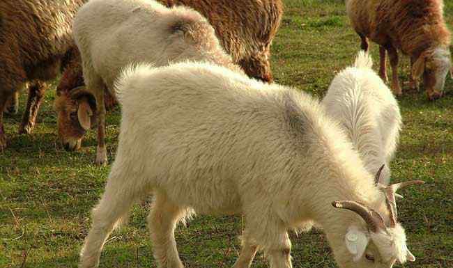 顺手牵什么 顺手牵羊的意思