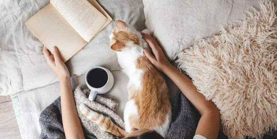 """猫怕冷吗 """"凌晨2点,我家的猫钻进了被窝"""":猫咪到了冬天有多怕冷?"""