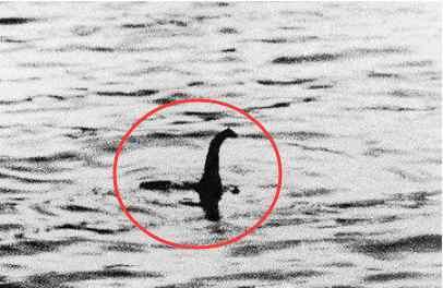 """史前怪兽 渔船捕获""""史前怪兽"""",却被船长扔回海里,日本专家:国人太蠢了"""