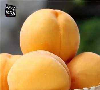 黄金蜜桃 舌尖上的美味,黄金蜜桃。